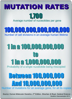 Mutation-Rates2